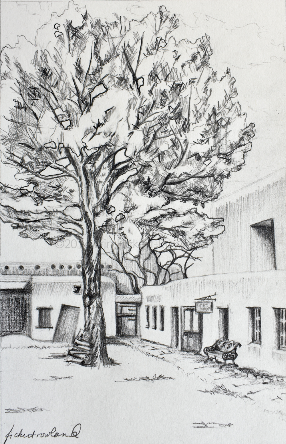 """A Tree Grows in the Courtyard, Santa Fe""  6 in x 9 in   Matted to 8 1/2in x11in"