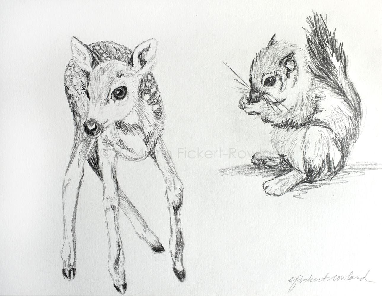 """Fawn and Squirrel""  8 1/2 in x 11 1/2 in  Matted to 11 in x 14 in"