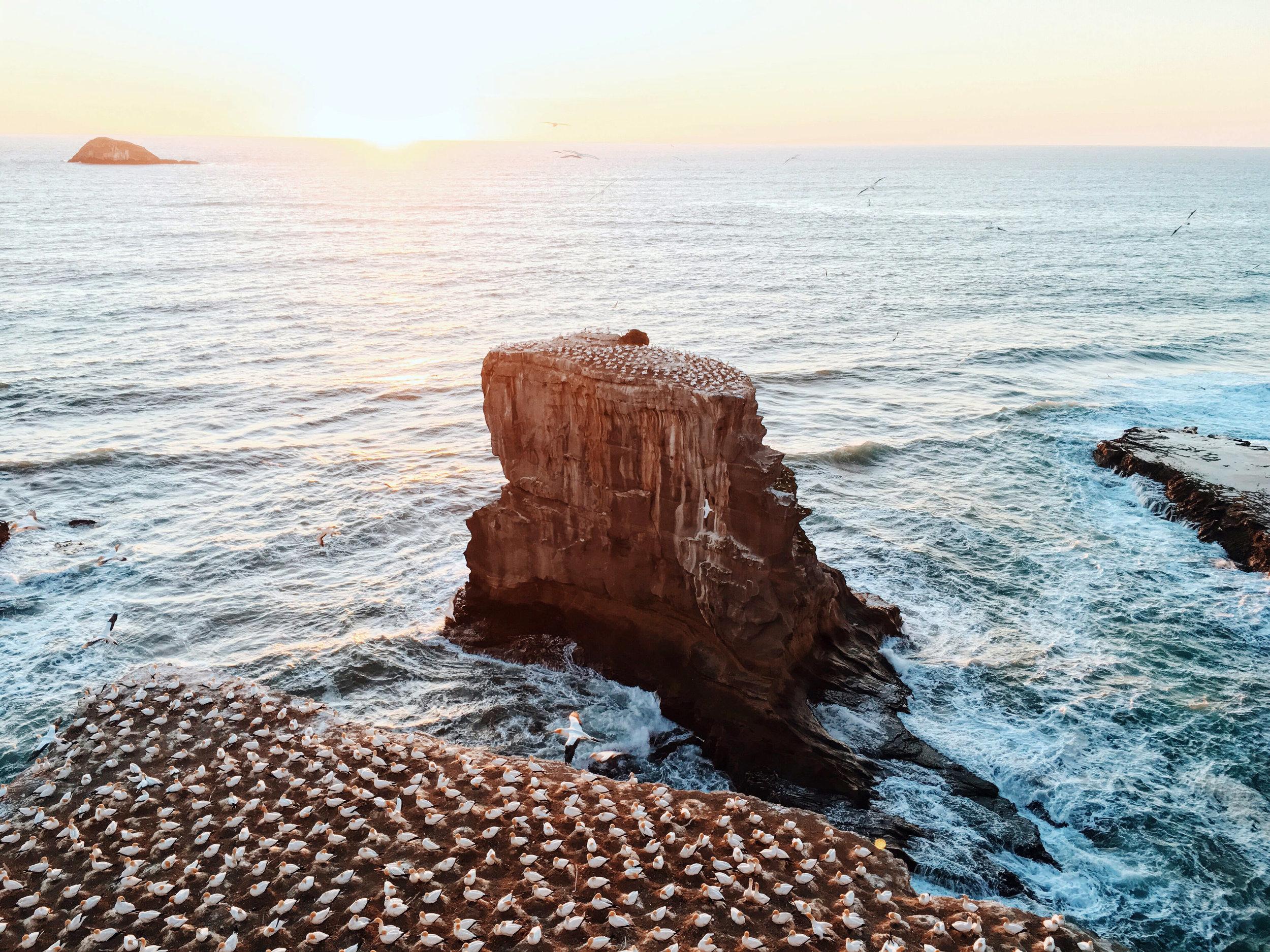 birds-settled-on-rocks-on-the-seashore-in-new-zealand.jpg