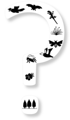 nz-biodiversity-story-questionmark_1.png