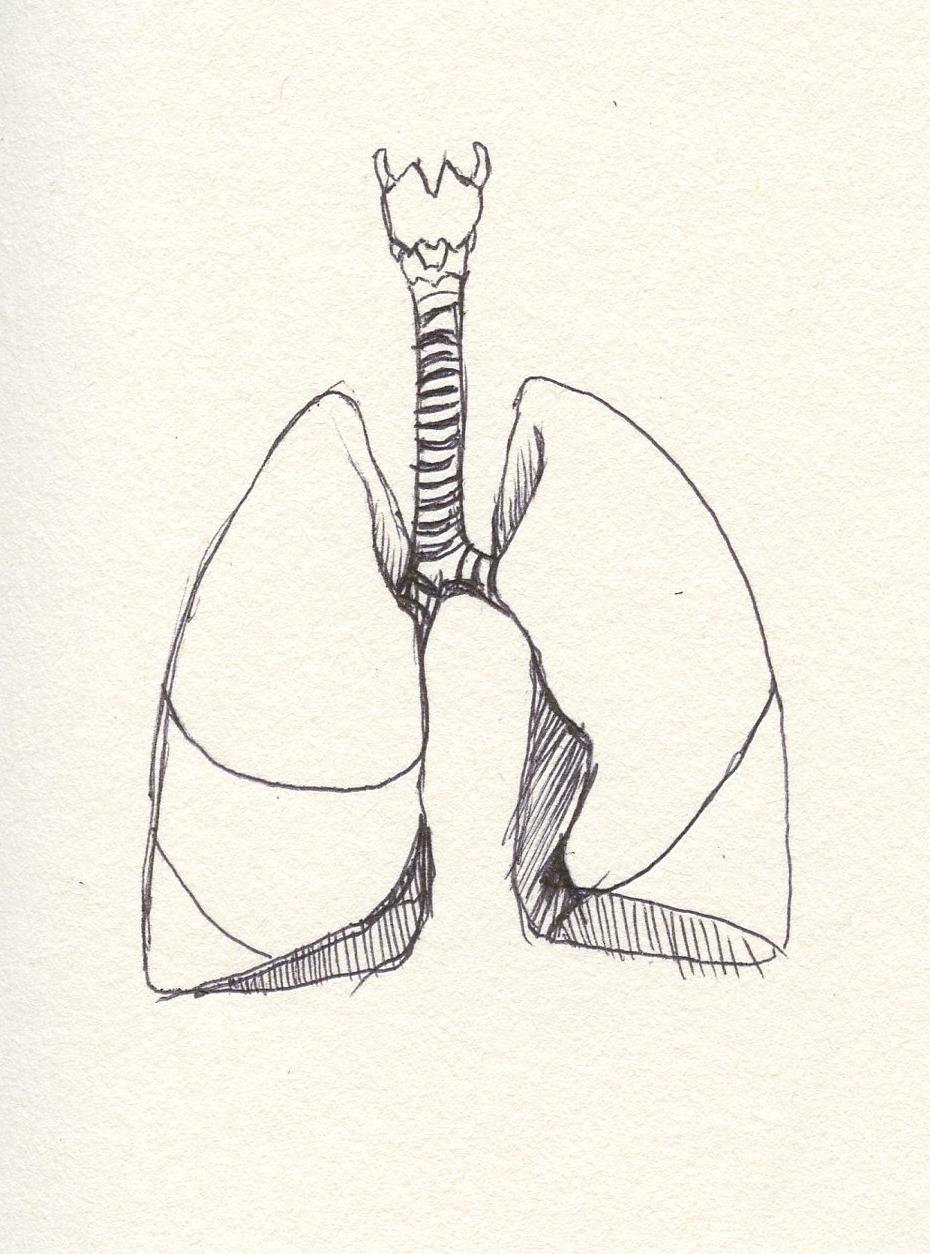 Concept art: Lungs
