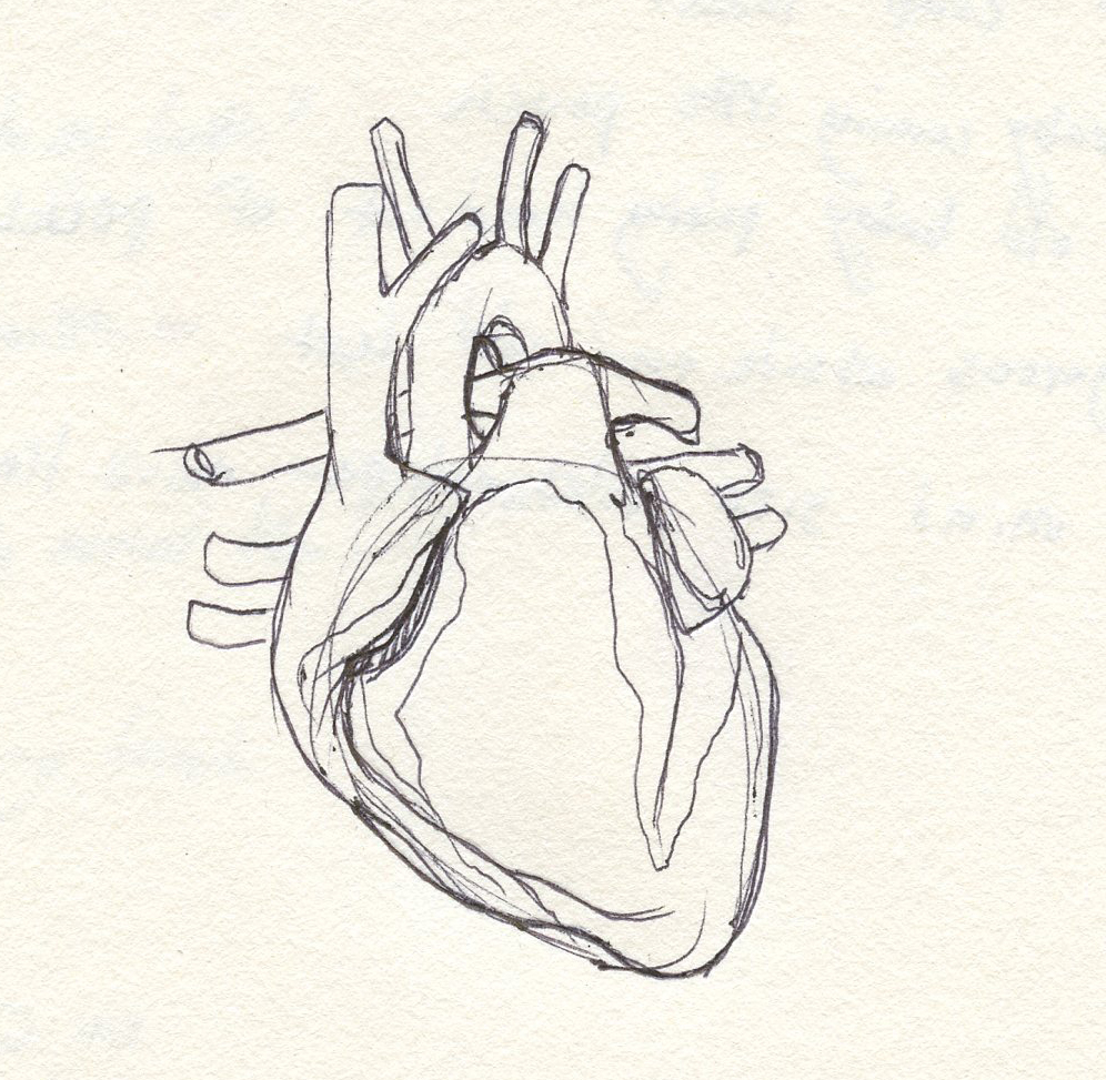 Concept art: Heart
