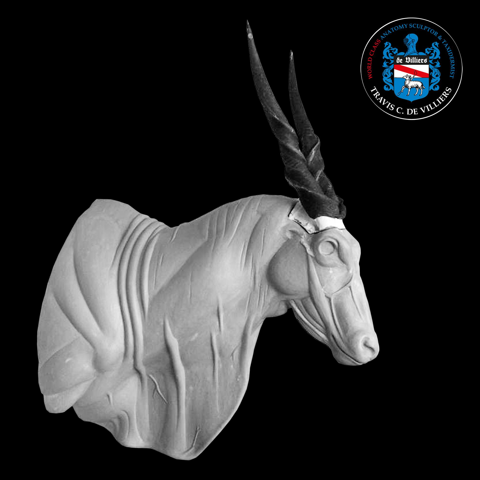 Eland - Taurotragus oryx