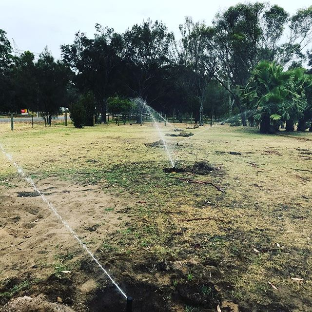 Up and running after not working for a year. #reticulation #perth #perthgardens #garden #kingsparkperth