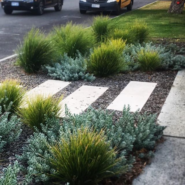 @newgradelandscapes . . . Are you sick of maintaining your grass verge? ✅ Tired of damaged sprinklers from parked cars? ✅  Worried about your gardens water usage ✅ A waterwise nature strip uses 90% less water than an irrigated grassed verge and requires little to no maintenance.  Seems the obvious choice, especially when you consider our precious water.  Save money 💰effort 😓 and water 💧- contact us for a full range of design options and styles to return your verge to a smart and beautiful nature strip and for other waterwise options for your landscapes @watercorporation @newgradelandscapes  #perthlandscaping #perthgardens  #perth  #perthwater  #cityofperth #watercorp #waterwise #watercorporation #savewater