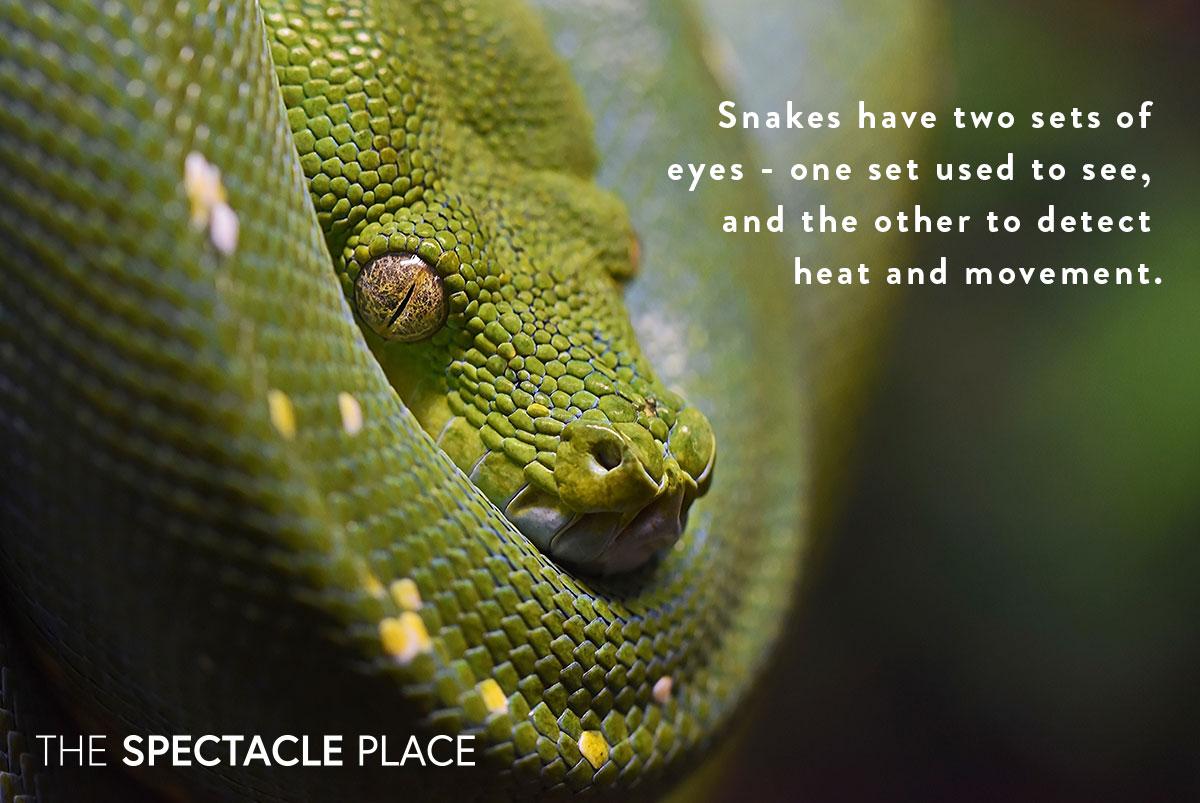 funfact_snake.jpg