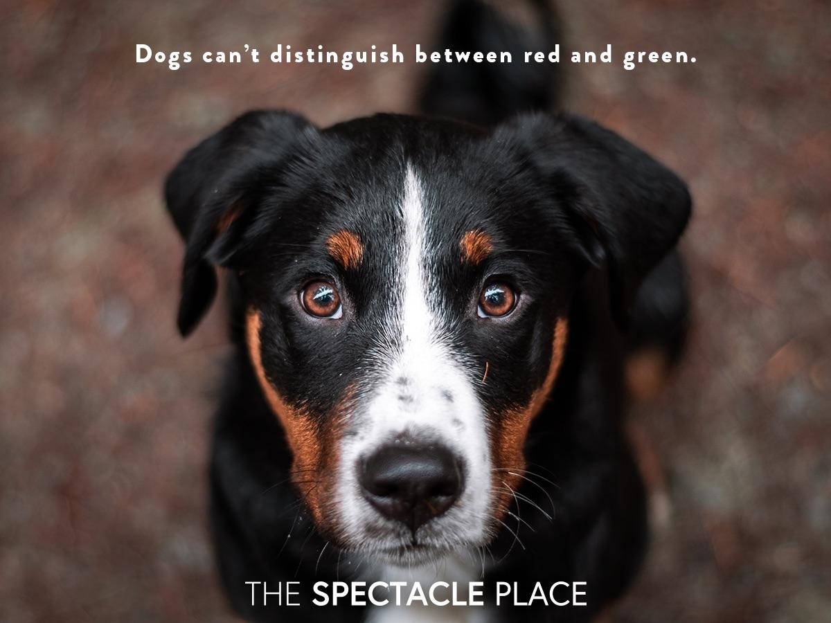 funfact_dogs.jpg