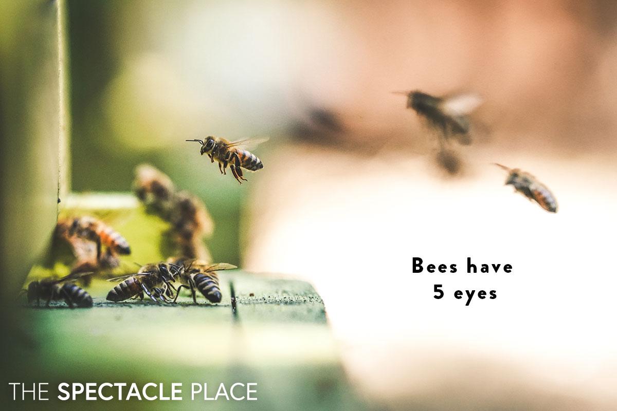 funfact_bees.jpg