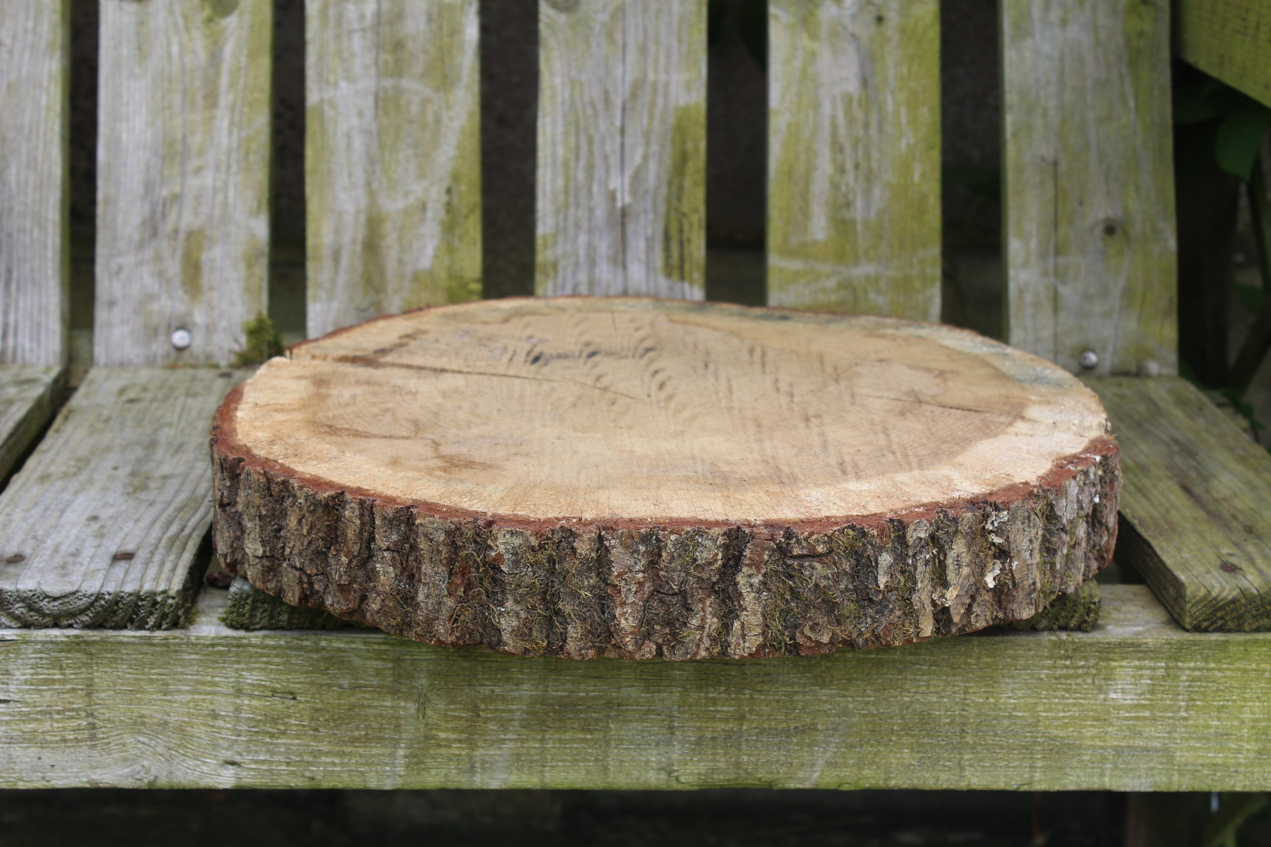 "- Log slices (Ideal for centre pieces) 12""x10 £5 each"