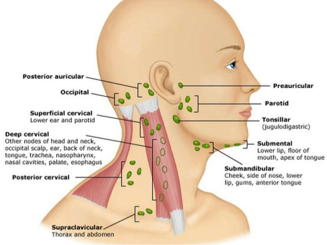 Lymph nodes in the neck/ face: you want to stimulate the lymph fluid in the direction of these points.