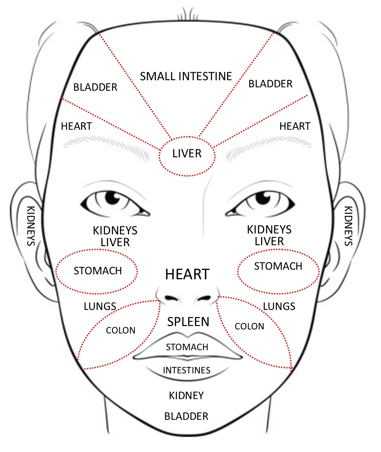 In Chinese medicine, face mapping is used to decode messages of distress from other areas in our body.The skin is one of the largest organs in our bodies, so when it starts acting up, this is an indication of something going on inside the body that is out of balance that we may be unaware of.  Image courtesy of  Acupuncture & Beauty Centre