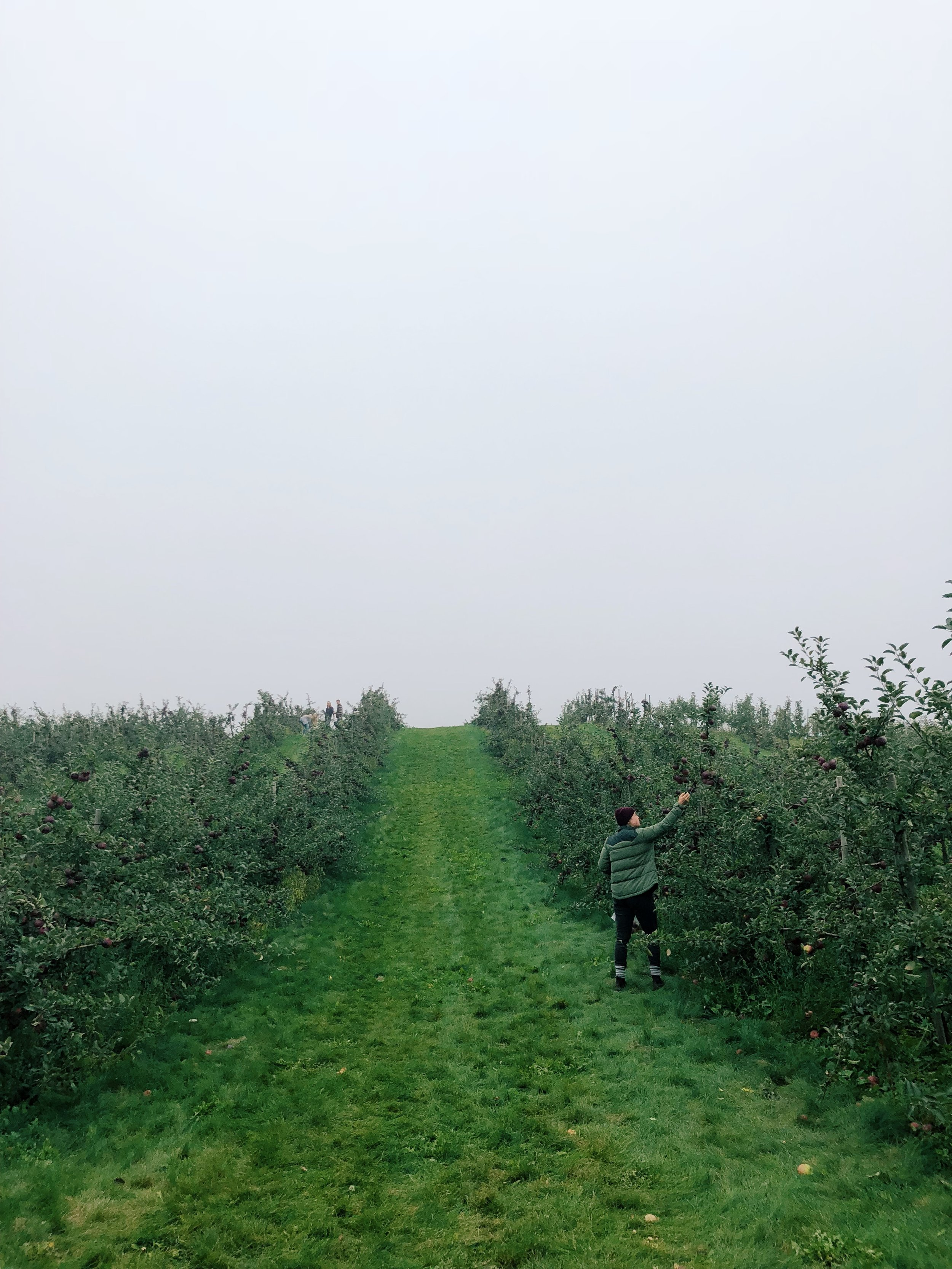 Picking apples October 8, 2018, in Ontario, Canada.