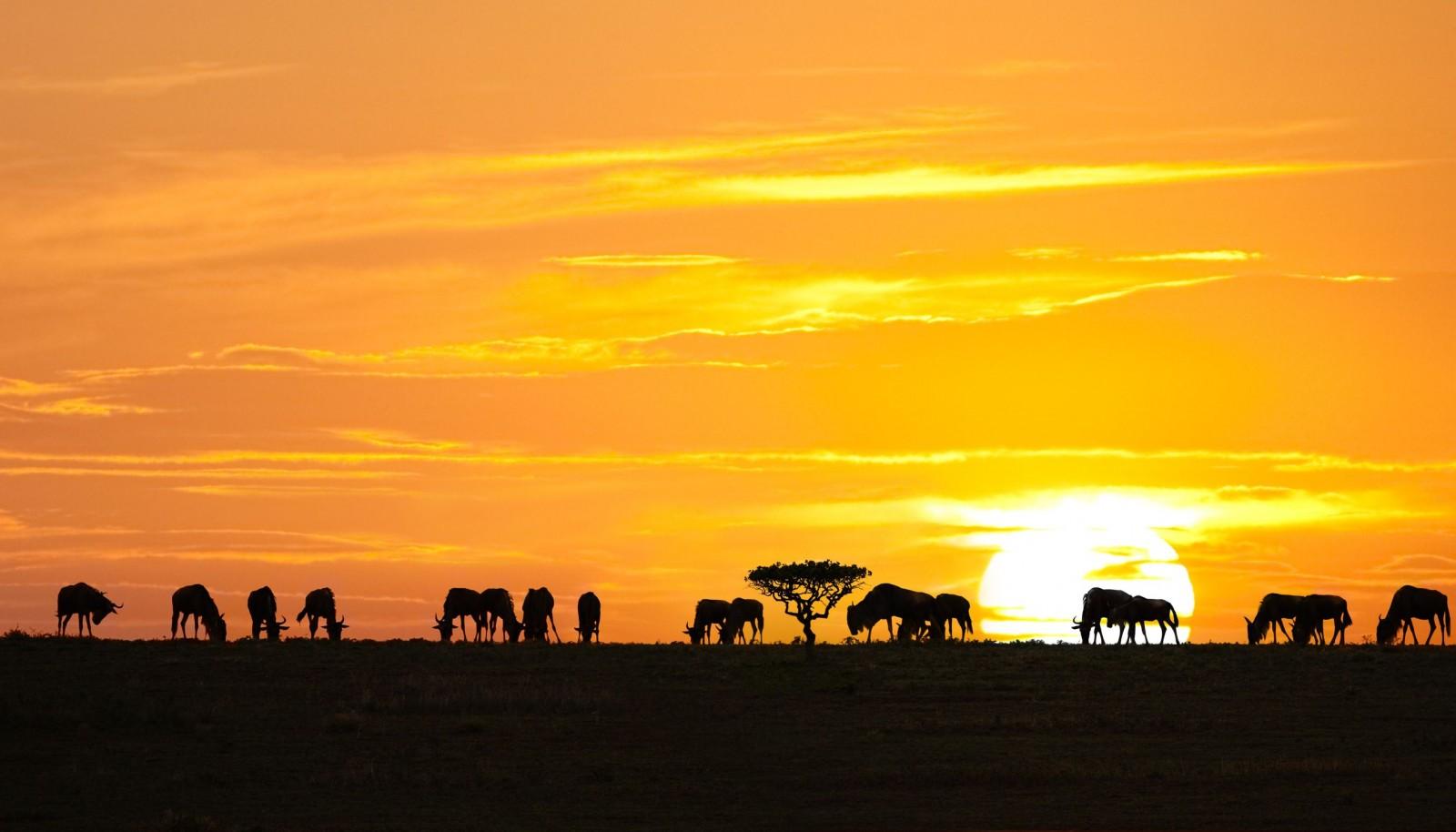 Wildebeests shadows, Serengeti National Park, Tanzania