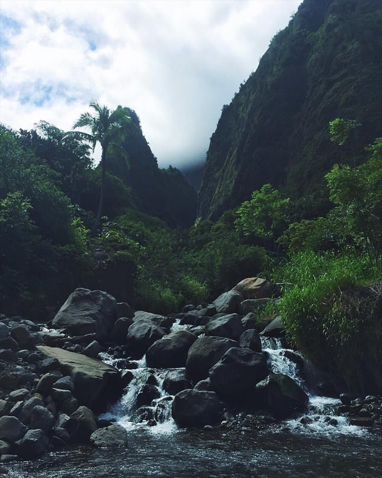 Lush Iao jungle, towards the beginning of my hike.