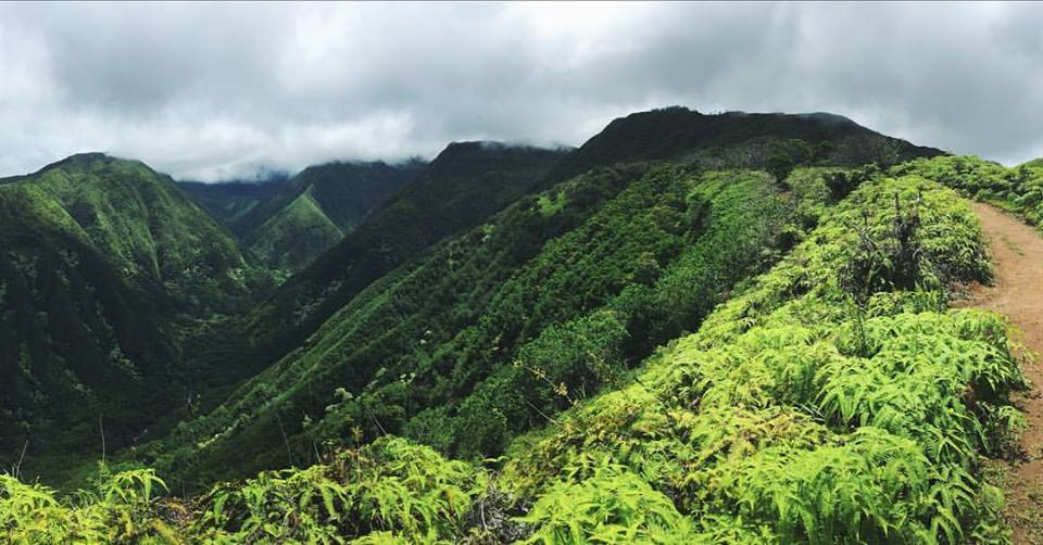 The Waihe'e Ridge.