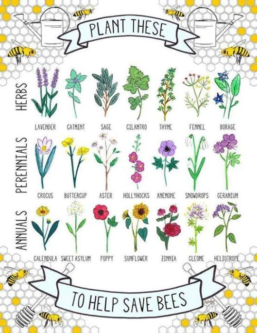 Planting bee-friendly flowers in your garden to feed the little guys! Many community groups offer volunteer opportunities to help plant these bee-friendly plants in city parks.  (Image:    ByzantineFlowers   )
