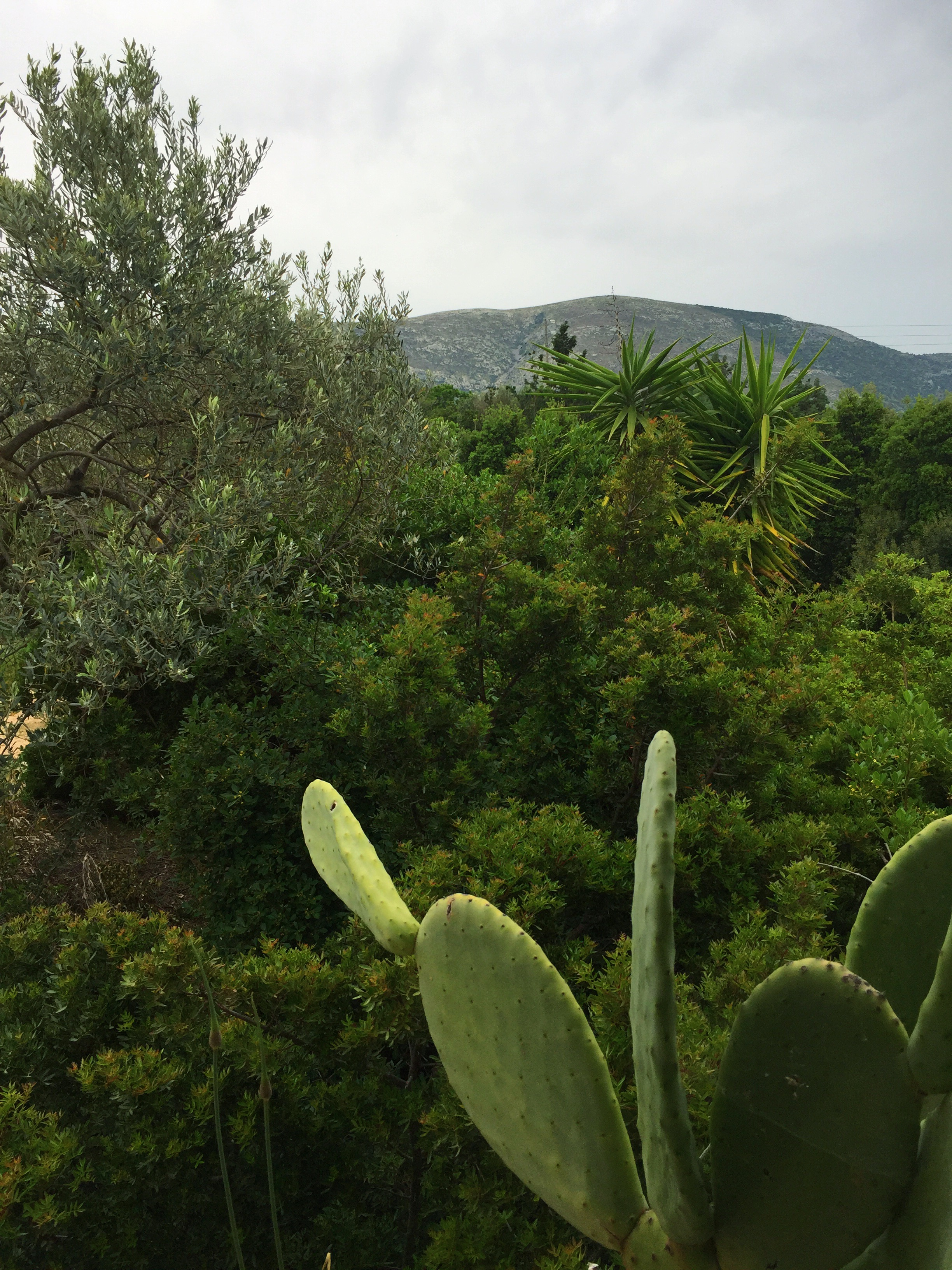 Views of the biodynamic farm in Markopoulo, where the Vipassana near Athens is held.