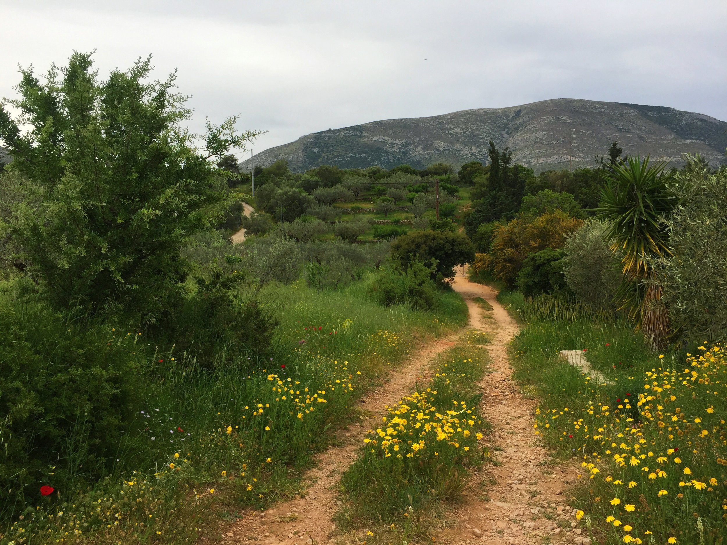 The women's walking are at the Vipassana centre in Markopoulo, Greece (a biodynamic farm).