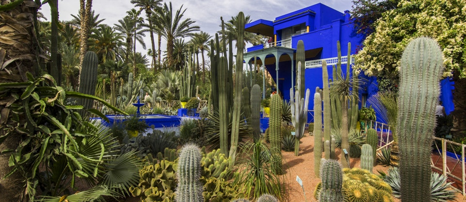 Speaking of gardens, this was one of the most majestic gardens in Marrakech: Jardins Majorelle. I love cacti!