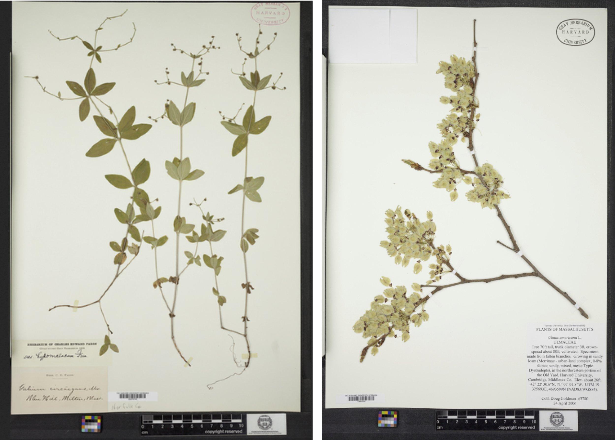 plantspecimen_collage copy.jpg