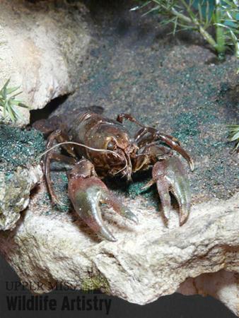 bases_crayfish.jpg