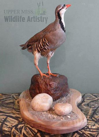 birds_chukar_rocks.jpg