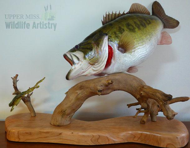 fish_largemouth_frog.jpg