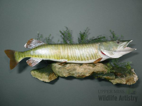 fish_muskie2.jpg