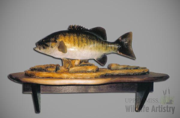 fish_smallmouth_reprobase2.jpg