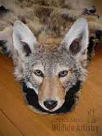 rugs_coyote_facefront.jpg