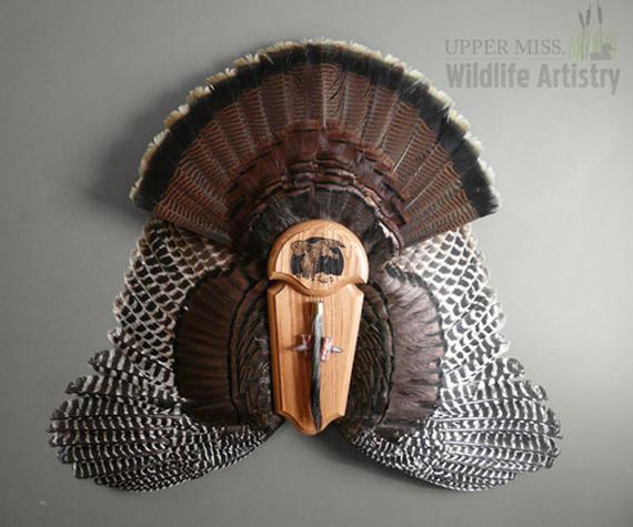 birds_turkey_fanwings.jpg