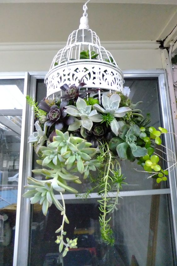 Birdcages - Hanging plants are the hardest to find cute planters for. Why not use a vintage birdcage?
