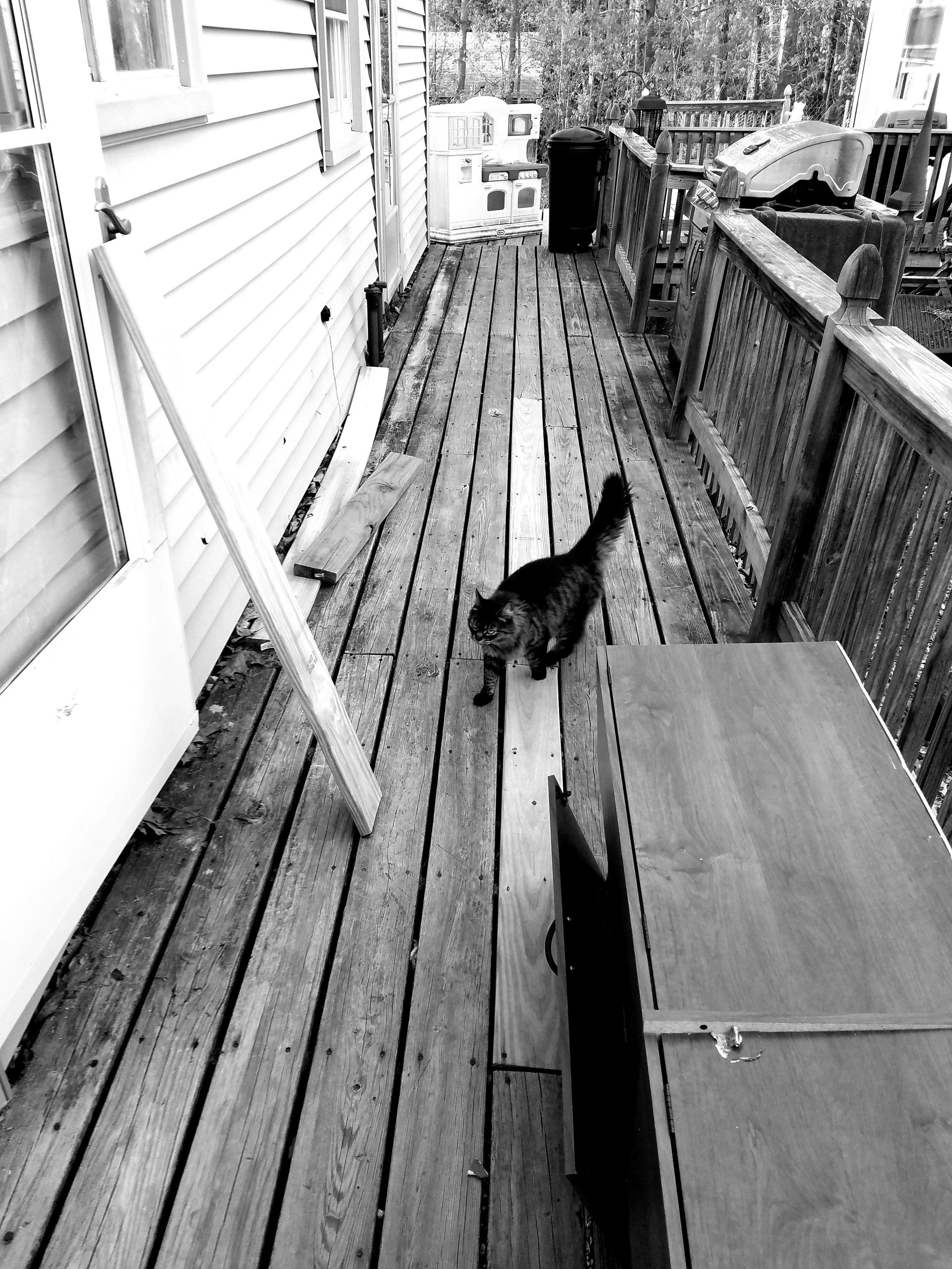 Tina's family's cat outside their home in Lisbon. (Maine Public photo by Susan Sharon)