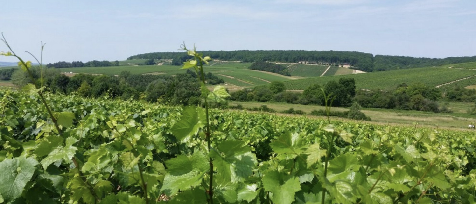 France_Dampt_winery Image.jpg