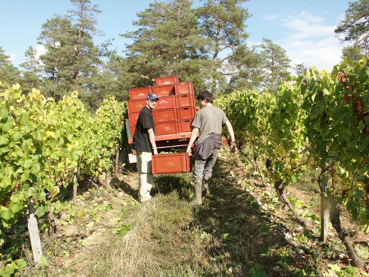 France_Bourgogne de Vigne en Verre_Winery Image.JPG