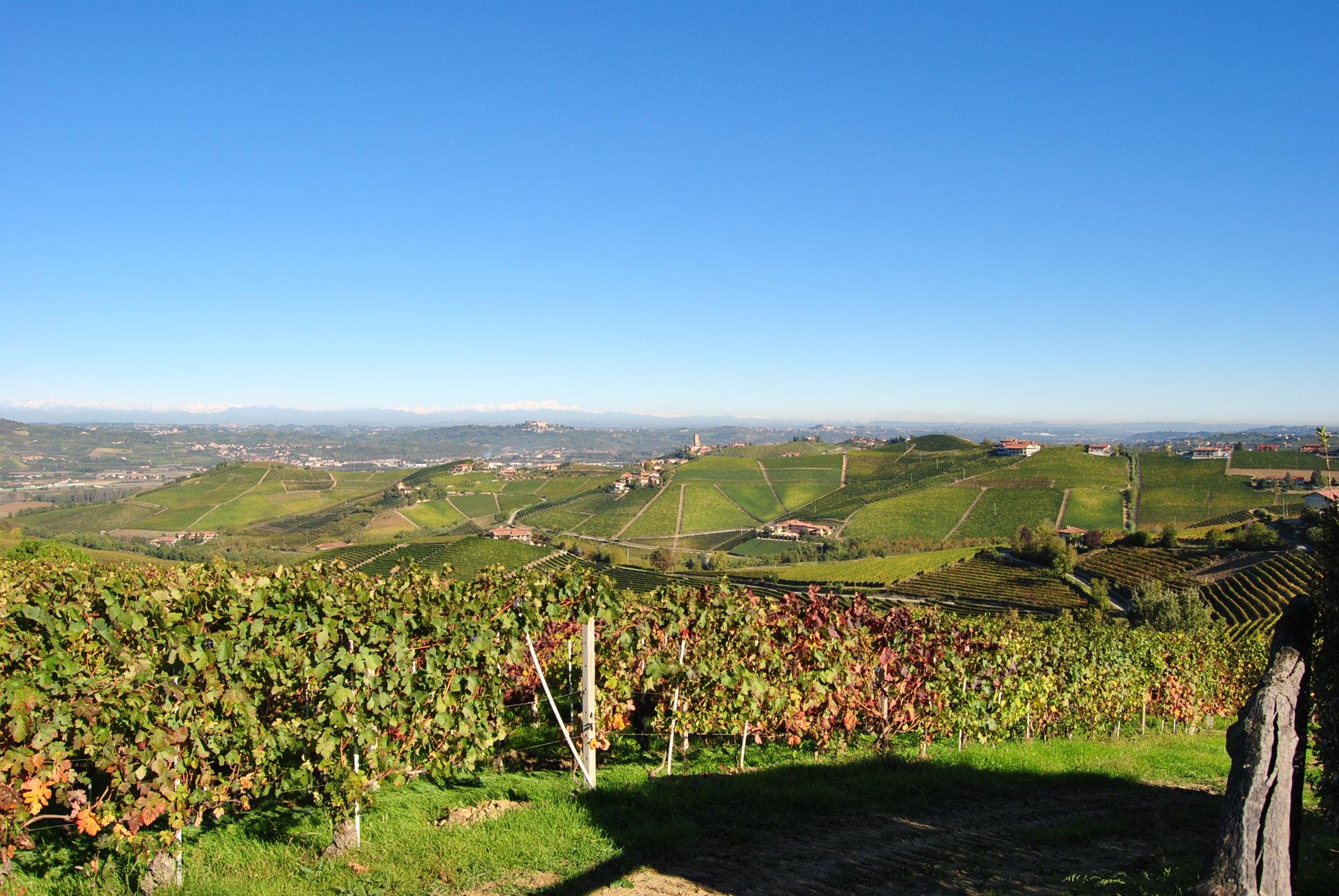 Italy_Cantina Del Nebbiolo Winery image.jpg