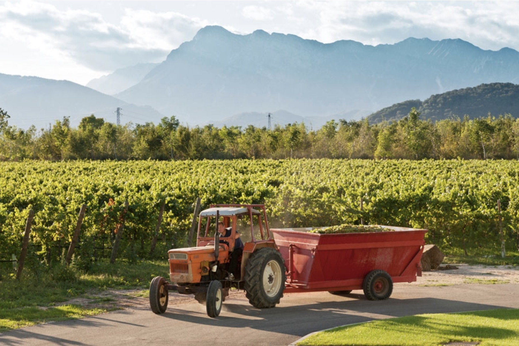 Italy_Fernanda Cappello_winery image (1).jpg