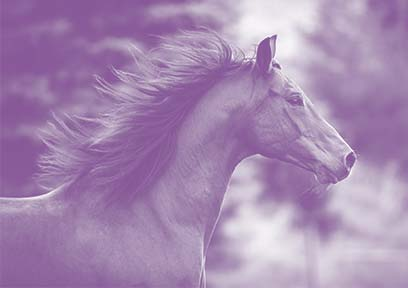 Purple_Horse.jpg