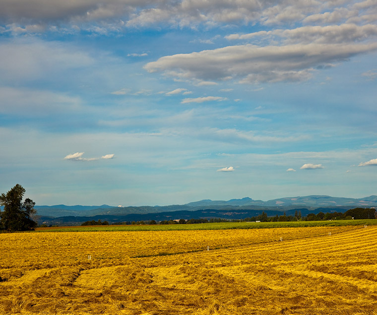 bigstock-Golden-field--7701857.jpg