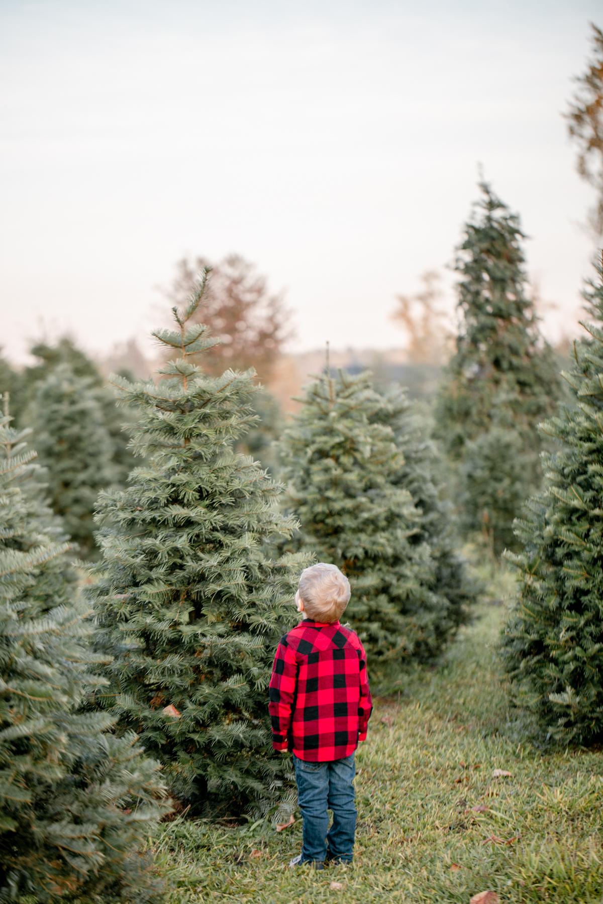 treefarm_2.jpg