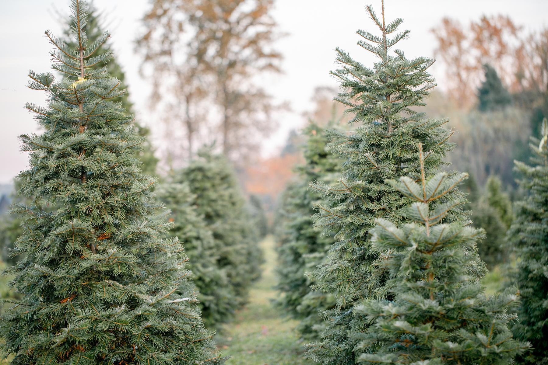treefarm_16.jpg