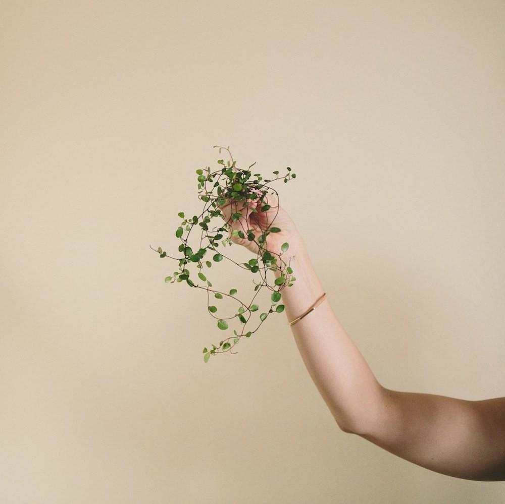 Rosehip_flora_JulieCopePhotography_About.jpg