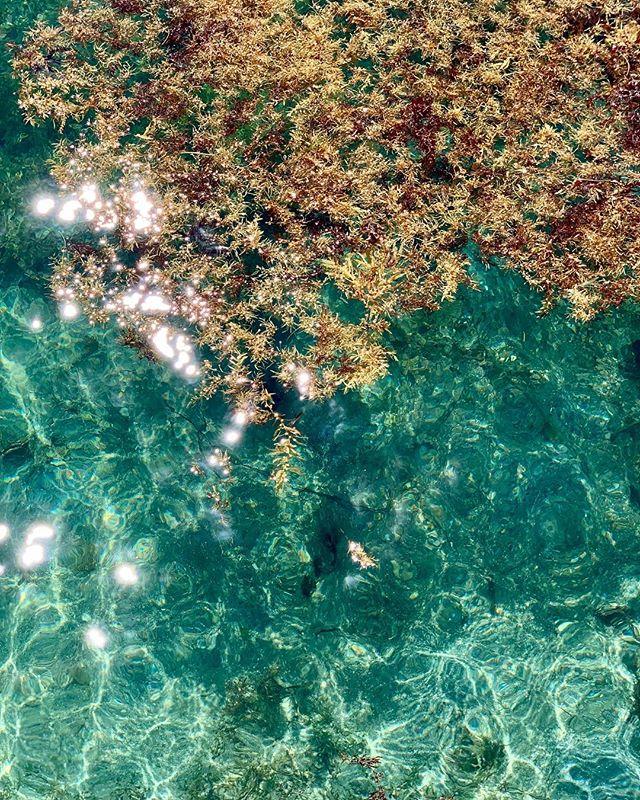 Ahh! The blue waters of Virgin Gorda! ♥️ 🏝 . . . .  #caribbean #beach #beaches #island #islands #travel #savannahbay #speedys #leverickbay #virgingordavillarentals #cocomaya #islandbirds #thebaths #traveling #fatvirgin #beachlife #islandlife #virgingordabvi #britishvirginislands #exploreeverything #virgingorda #ilovevirgingorda ##bvi #bvilittlesecrets