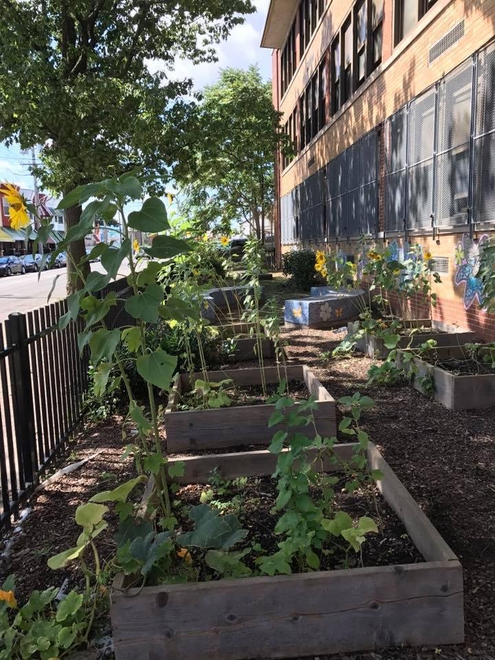 beautifying school yard
