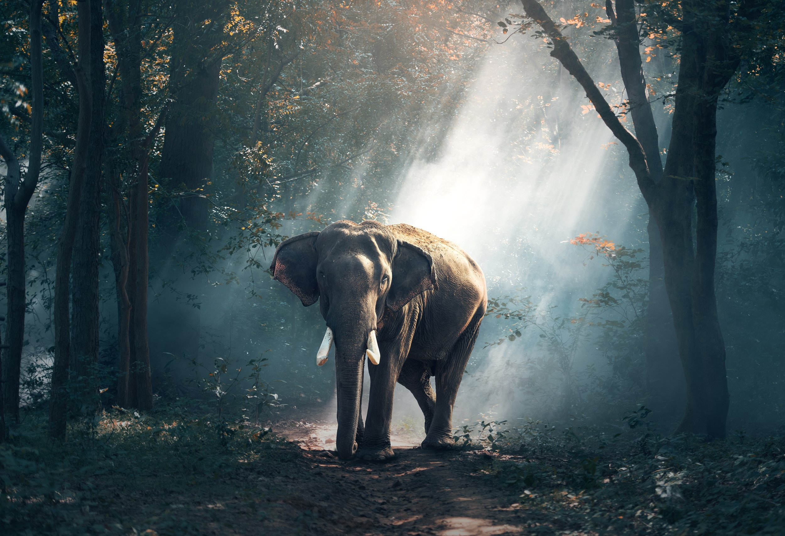 Elephants... - ...are known for their strength, connection to their family, empathy, playfulness, and the ability to not only communicate, but mourn.