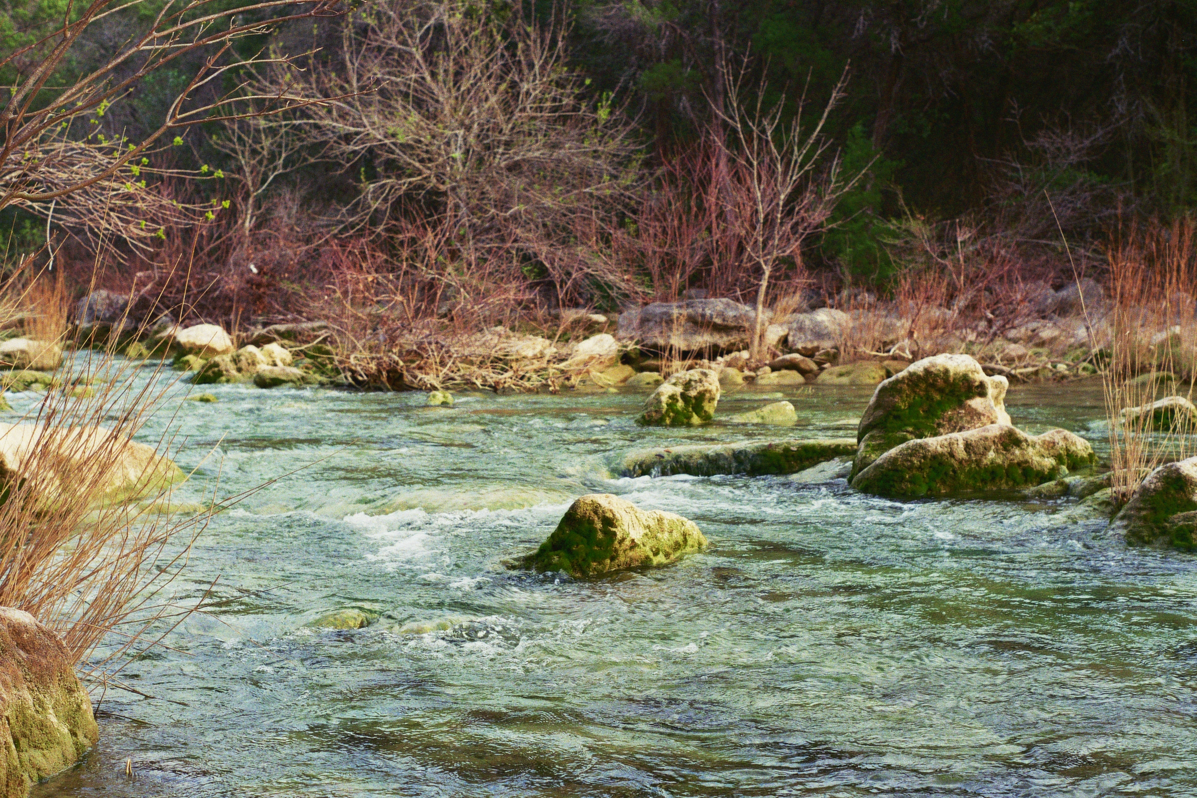 Barton Creek Greenbelt.  Austin, TX