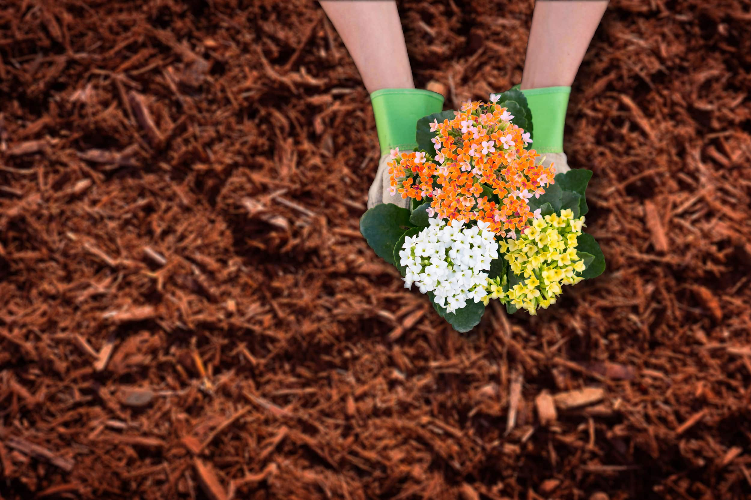 hands-and-flowers-over-mulch.jpg