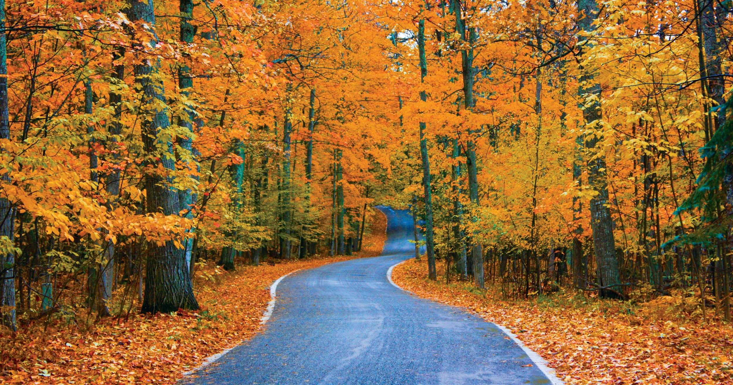 636123971646125841-Tunnel-of-Trees-Outdoor-Image.jpg
