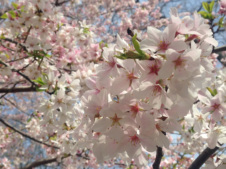 meditation and spring