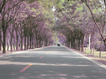 Beautiful tree lined road.jpg